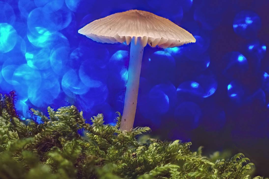 Mushroom /8 by andabata
