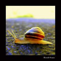 A SNAIL by Shum23