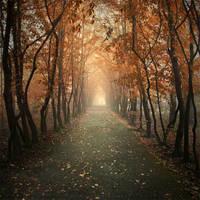 Autumn alley II by Alshain4