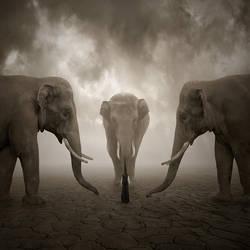 Elephant whisperer by Alshain4