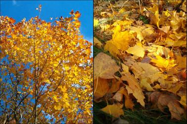 yellow autumn_ by asiaaa3