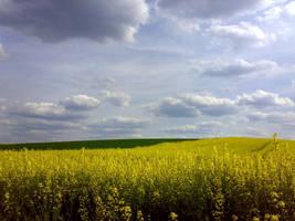 field by yuya-yo