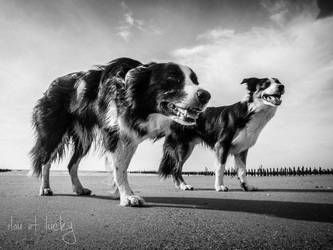 ilou et lucky by roon1305