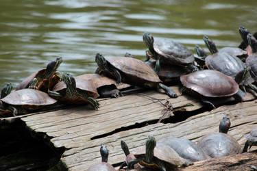 Turtles in Nara by SumairiiSan
