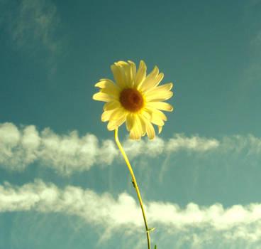 Flower Sun by InthenamePhotography
