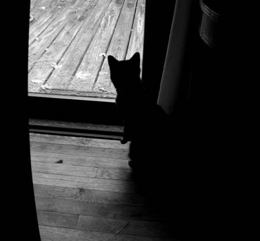 Kitty...what might thou see by InthenamePhotography