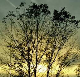 A Beautiful Tree by InthenamePhotography