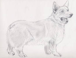 Corgi Sketch by kwills84