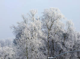 white trees by pimpelpet