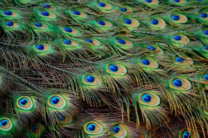 Many Eyes by OcularFracture