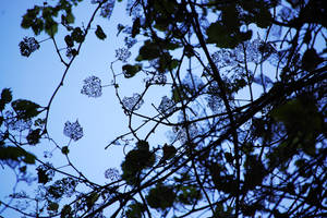 Fairy Leaves by OcularFracture