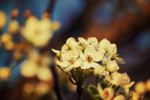 Blossom in the Trees by OcularFracture