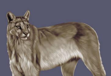 Cougar by Tito-Morales