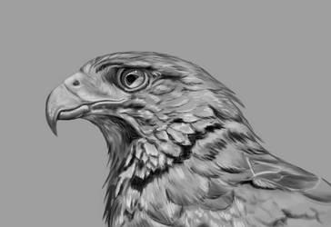 Eagle by Tito-Morales