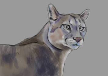 Puma1 by Tito-Morales