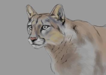 Puma2 by Tito-Morales