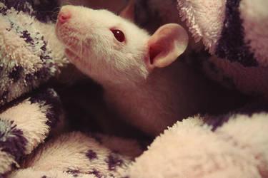 Miss Piggy by DaphneWolfsong