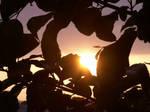 Dark leaves of the sun by senorfro