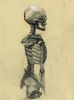 Skeleton by napoleoman