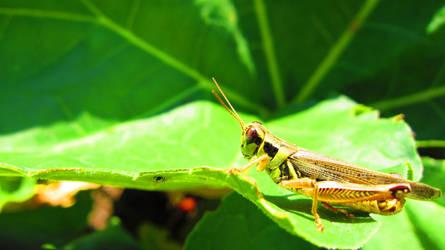 Grasshopper 2 by MidnaXX-231