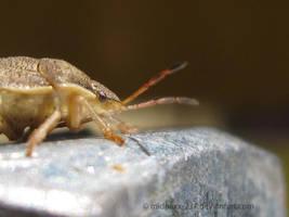 Shield Bug by MidnaXX-231