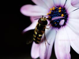 Eine Kleine Biene by noemia