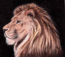 Lion by OriNerud