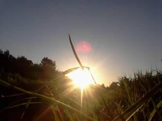 sun is here by Sardaukar84