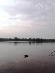 water and birds by Sardaukar84