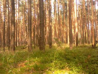 forest2018 by Sardaukar84