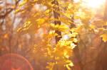 autumn vintage. by strcplp3