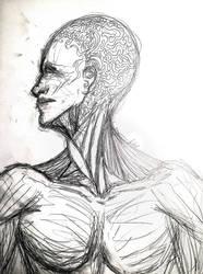 Anatomical Wip by Liz-DarkWarrior
