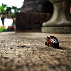 La Cucaracha by Liz-DarkWarrior