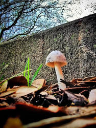 Mushrooooooom by Liz-DarkWarrior