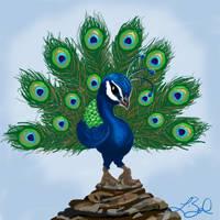 Peacock by LeelaB