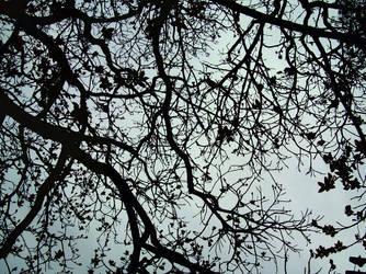 Tree by Jub-s