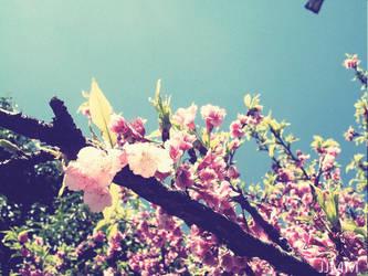 Spring by Jub-s