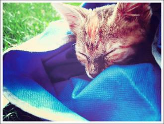 Kitten. by dmnchuck