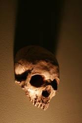 Stock: Skull 2 by TamvakisPhoto