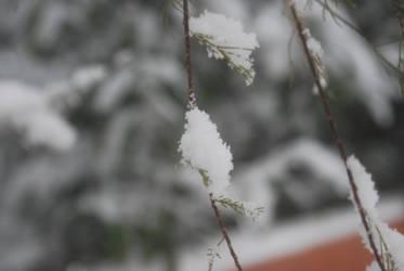 Closeup Snow by EnisraBowman