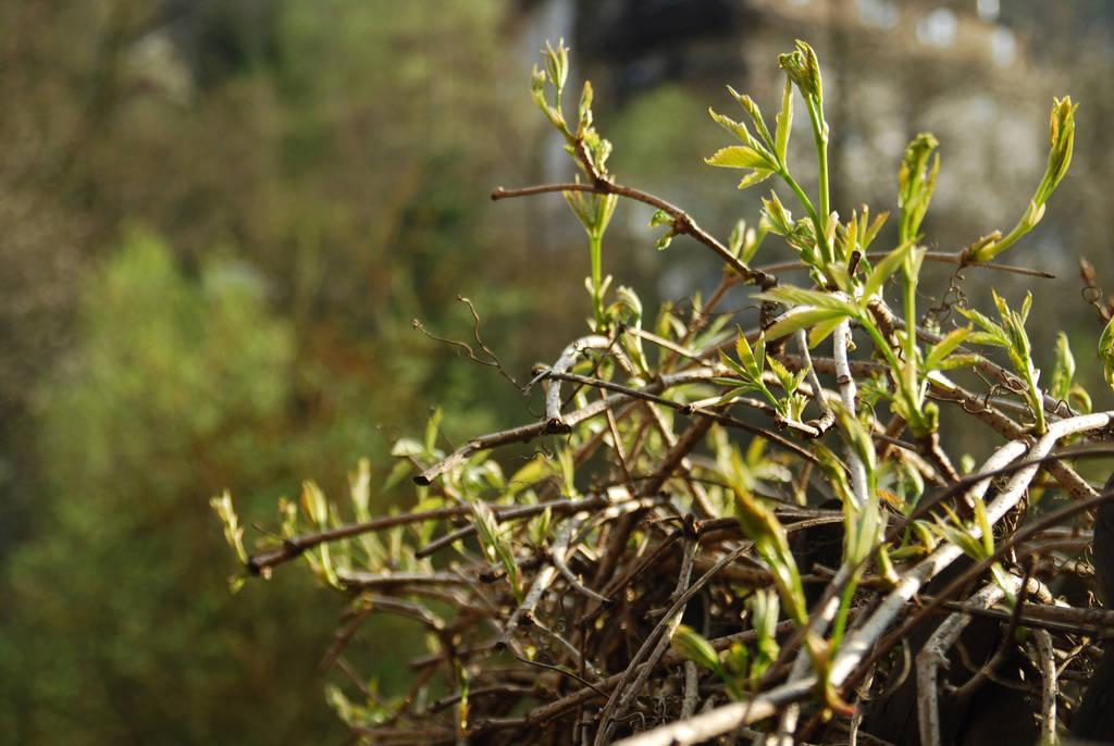fresh leaves by EnisraBowman