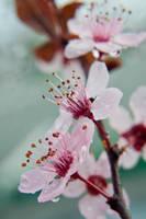 Spring by Spademm