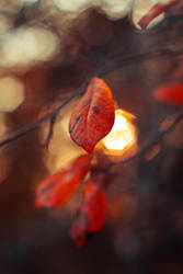 Autumn Light by Spademm