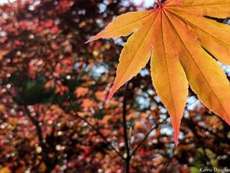 Maple leaf #5 by Naturevulpex