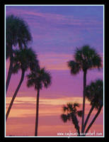 Palm Trees Sunset by caybeach