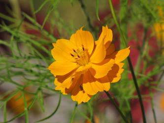 Blossom Corner Pt 2 by caybeach