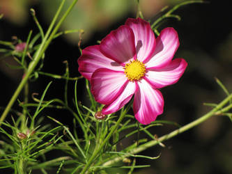 Blossom Corner Pt 3 by caybeach