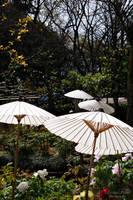 Garden of Toshogu-Shrine by LunaFeles