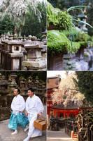 Nara 5 by LunaFeles