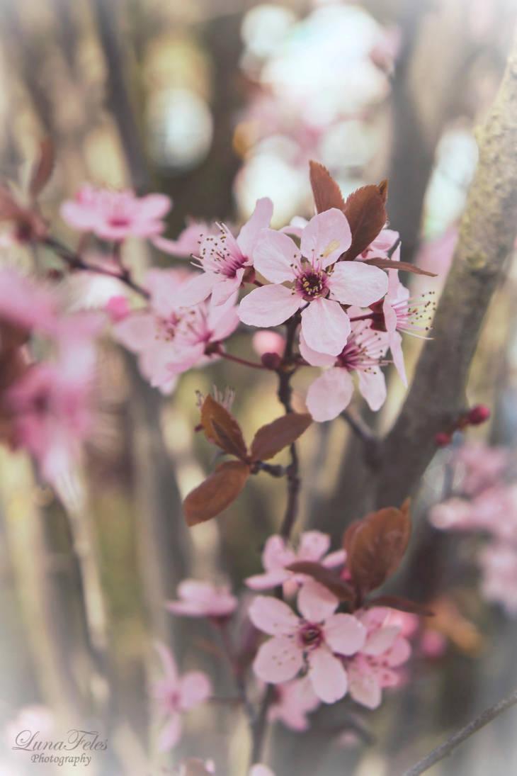 springtime by LunaFeles